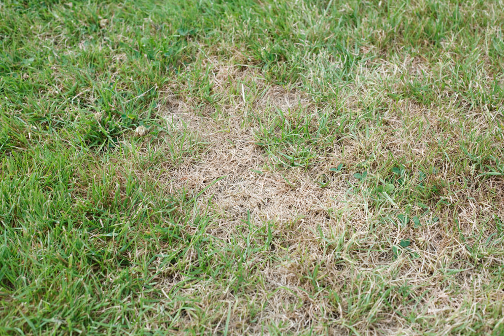 lawn with unhealthy brown dead patches