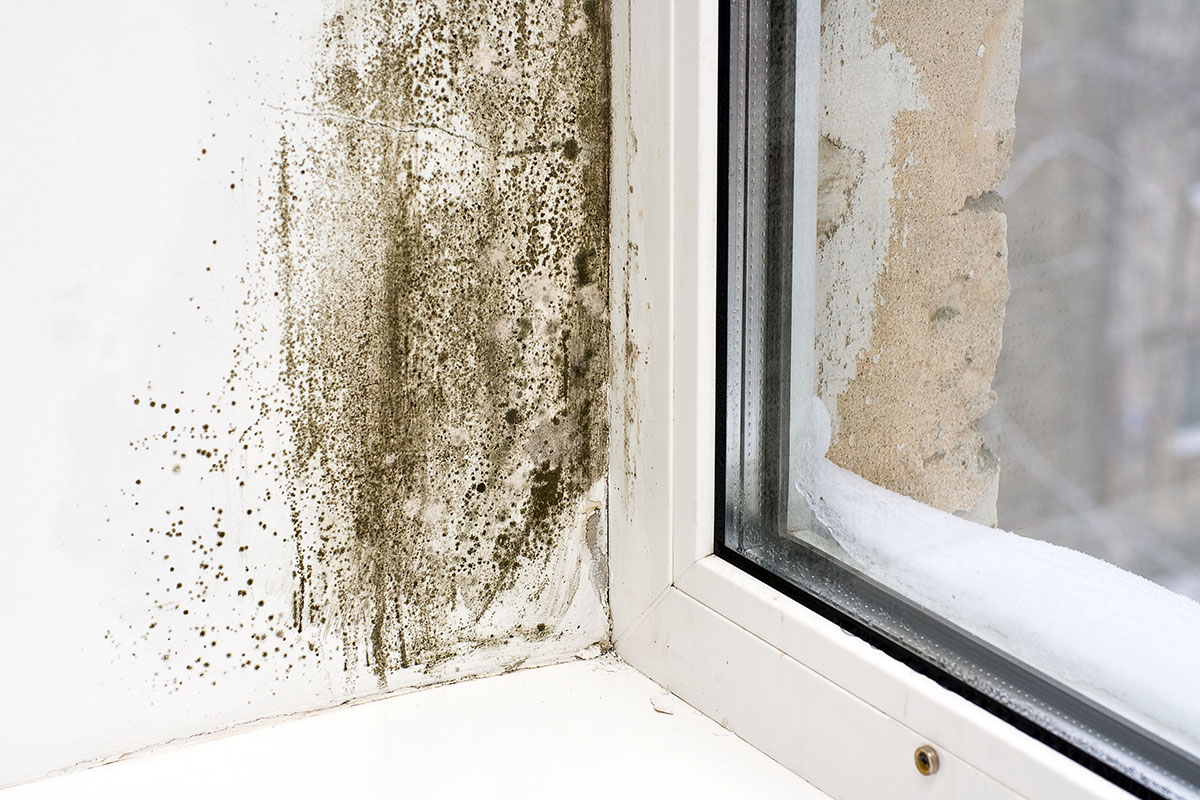 mold on a windowsill