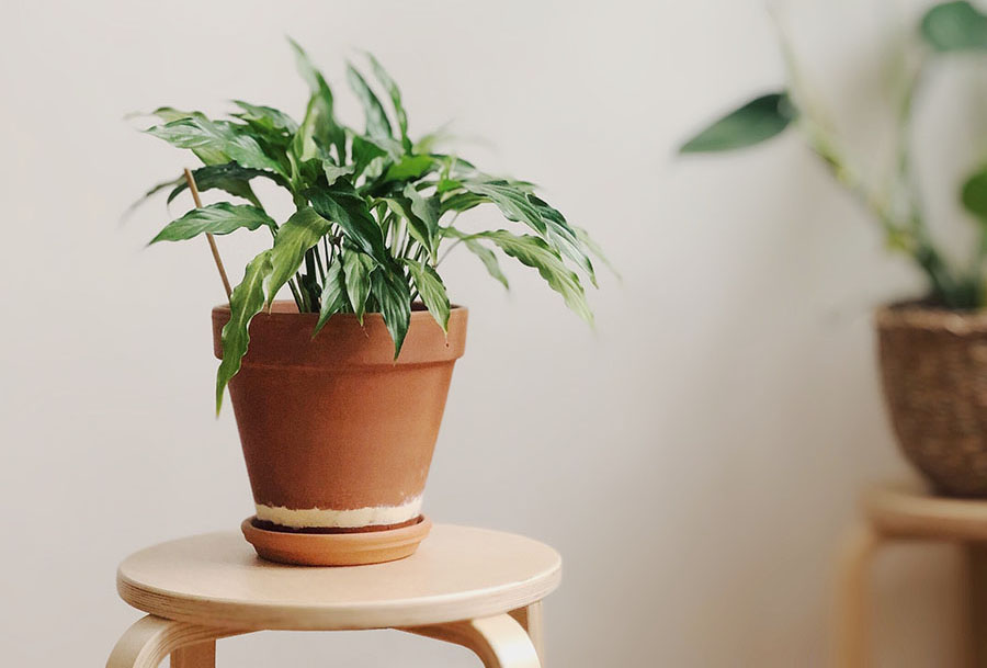 green plant in a clay pot