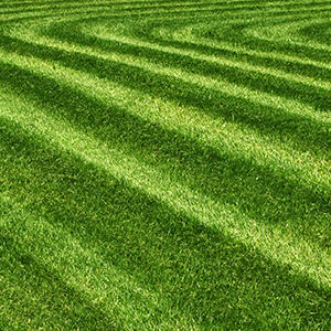 fresh cut green grass